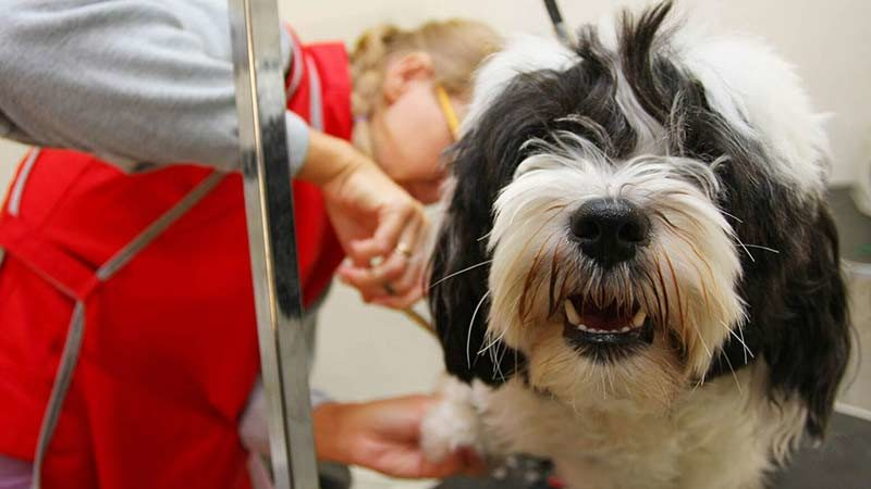 akc s.a.f.e. grooming program – american kennel club