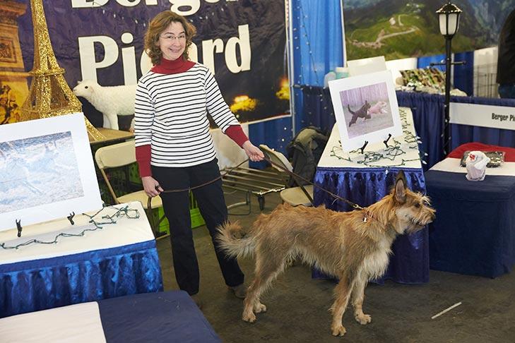 Akc Dog Show 2020.Akc Meet The Breeds American Kennel Club