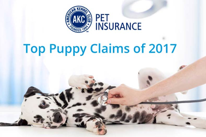 AKC Pet Insurance Top Claims of 2017 Dalmatian