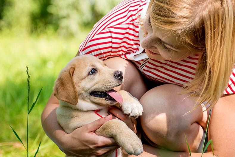 What Is The Best Age To Send Puppies To Their New Homes