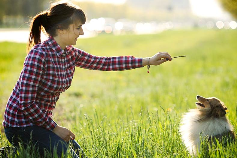 13 Of The Most Trainable Breeds