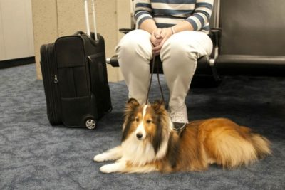 Travel Tips United PetSafe Airport
