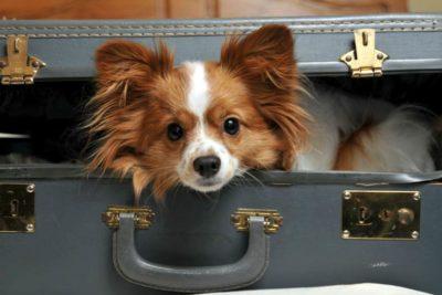 Travel Abroad Suitcase United PetSafe