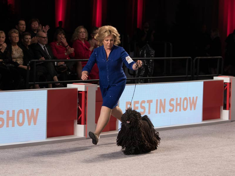 How to Watch AKC National Championship 2017
