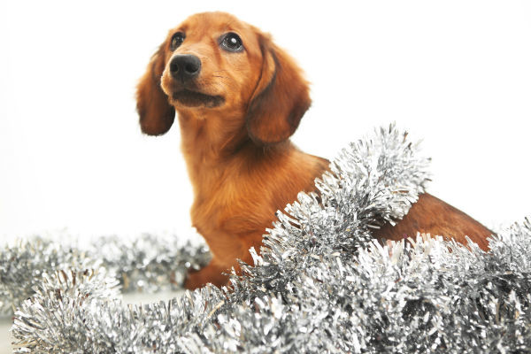 dachshund tinsel