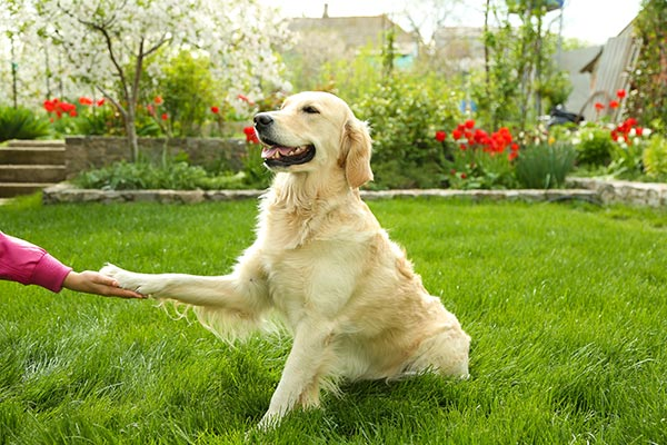 retriever-paw-body.jpg