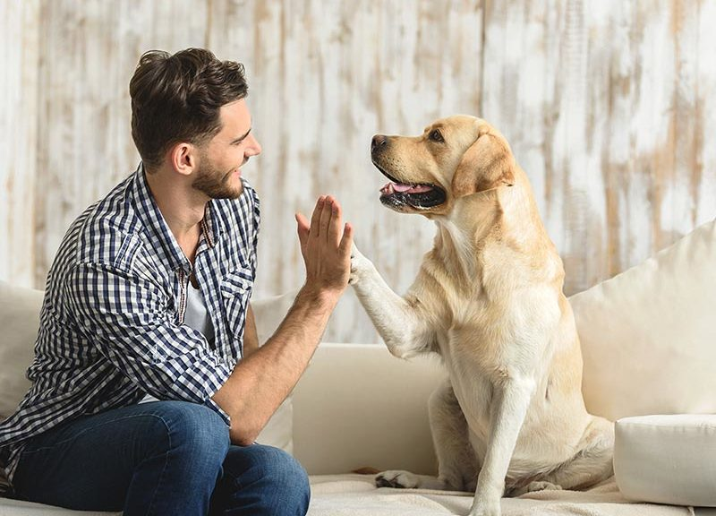 Dog High Five Training: How to Teach a Dog to High Five