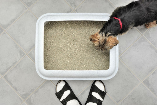 Dogs Develop Preferences For Certain Surfaces. For Example, If Your Dog Has  Spent A Lifetime Going To The Bathroom On ...