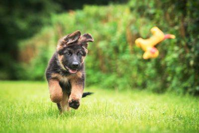 puppy-exercise-header
