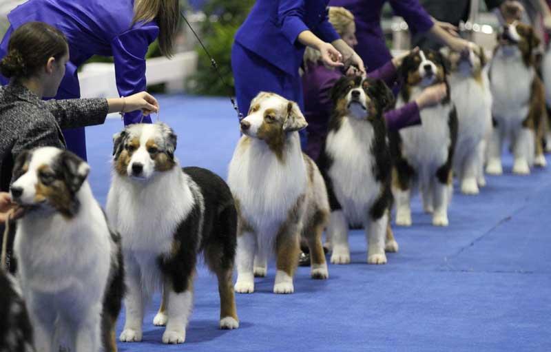royal canin dog show 2017