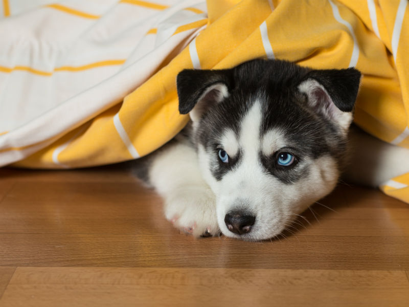 What Happens If You Sneak A Dog Into Your Apartment American Kennel Club