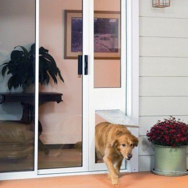 Best Dog Door That Doesnu0027t Require a Hole in the Door/Wall & The Best Dog Door for Your Pooch: Do You Have the Right One?