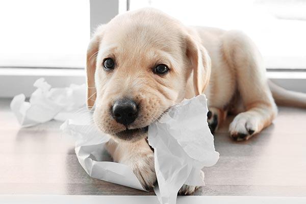 puppy-teething