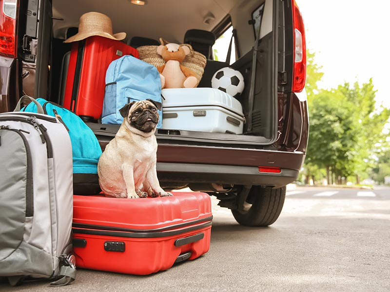 09e7acbb64 5 Things to Pack When You Board Your Dog