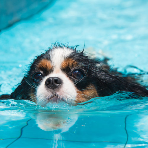 Can All Dogs Swim Training Tips For Dog Swimming