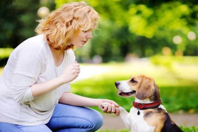 beagle-dog-senses-hero