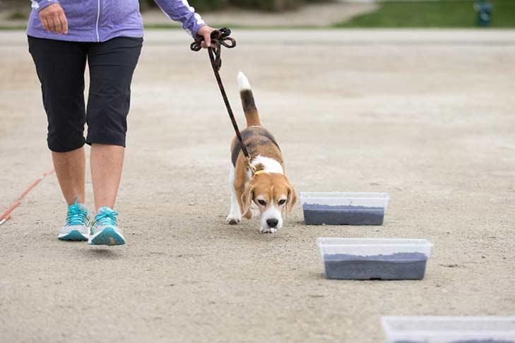 beagle-scent-work-hero