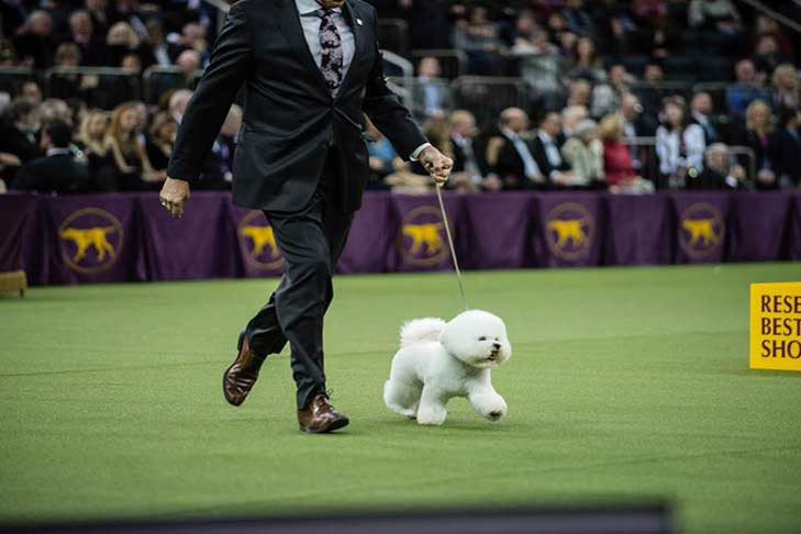 18 Pictures Of Flynn Westminster 2018 Best In Show Winner