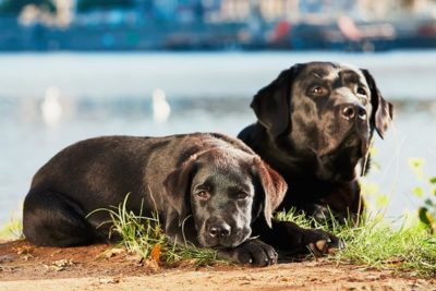 older dog and puppy