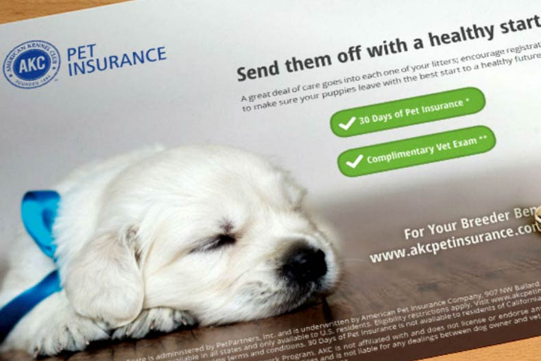 Do You Need Pet Insurance For Your Dog? – American Kennel Club