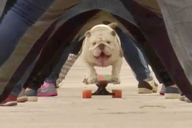 Bulldog Skateboard Guinness World Record
