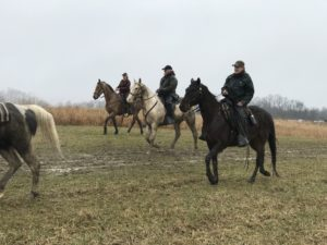 Group-on-Horses-2018-AKC-Gun-Dog-coverage