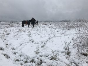 In-the-snow-2-2018-AKC-Gun-Dog-coverage