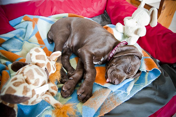 How Much Sleep Do Puppies Need? Here's How to Make Sure