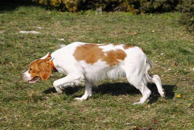 brittany-smelling-grass-header