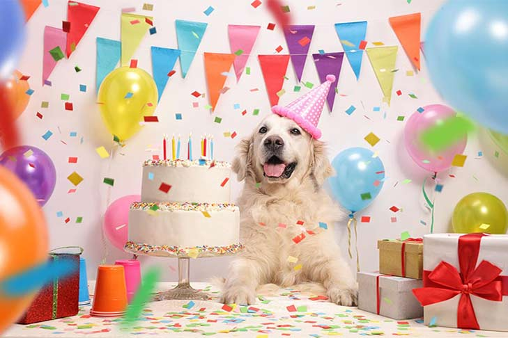 Happy Birthday Dear Dog How To Throw An Epic Dog Birthday Party