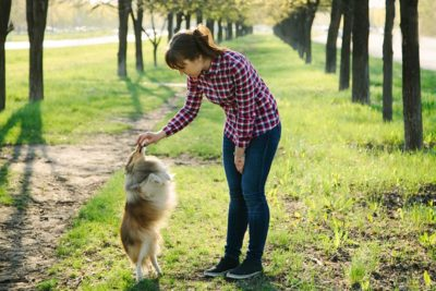 sheltie-outside-standing-up-woman-training-header