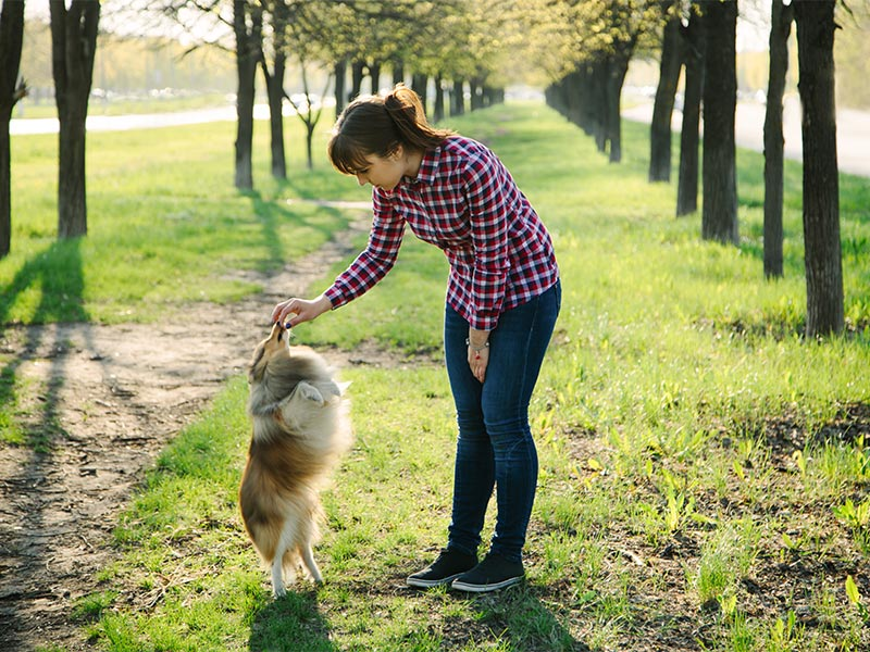 What Not to Do When Training A Dog: Dog Training Mistakes