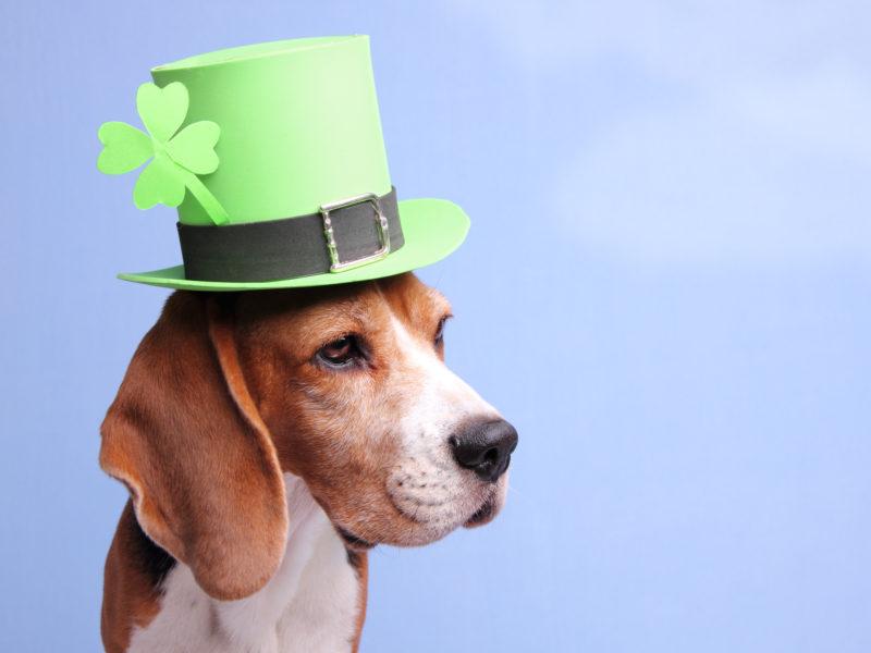 31 Irish Dog Names Perfect for Any Breed