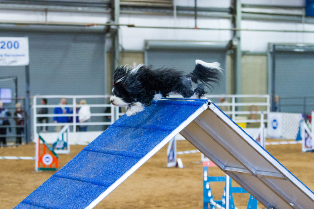 Agility Competition A-Frame