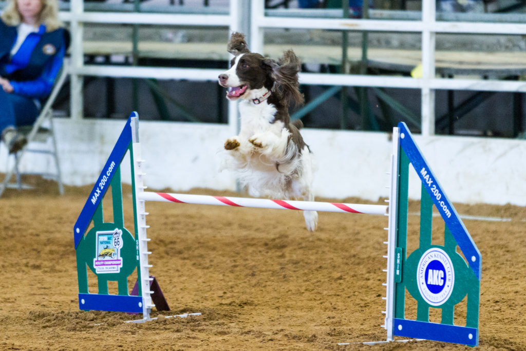 Agility Competition Jump
