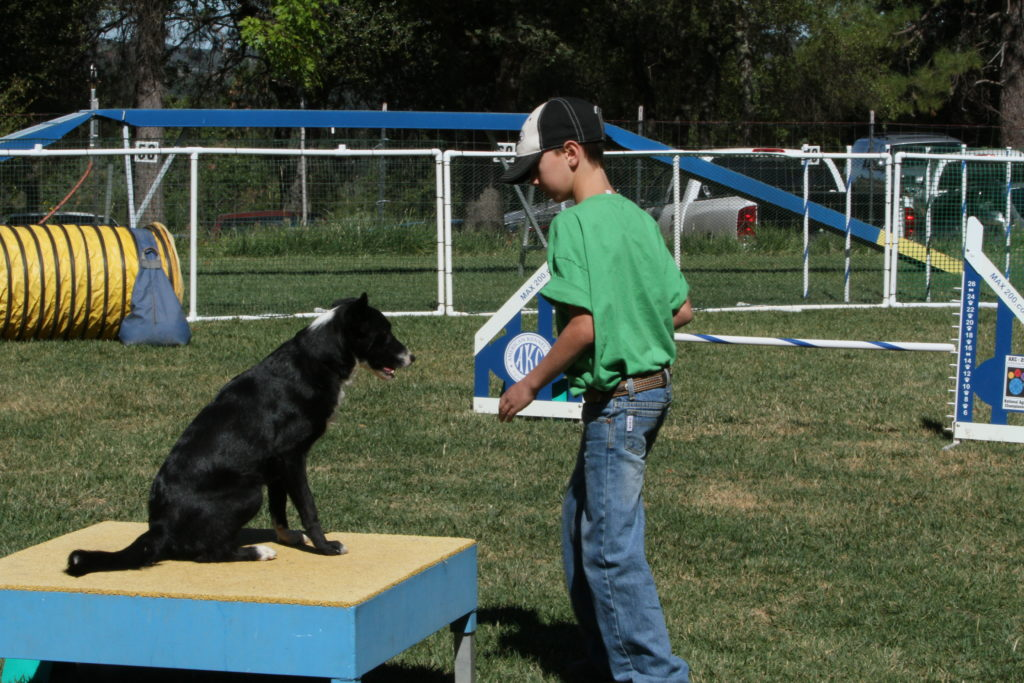 Agility Competition Table