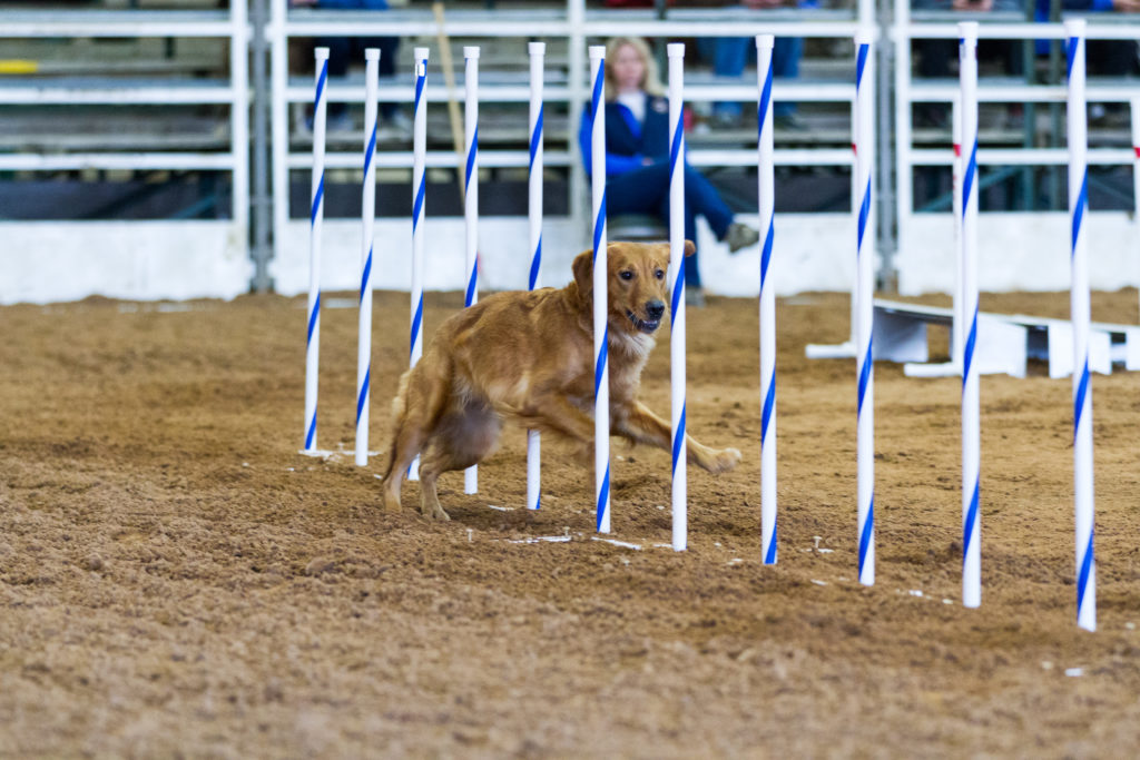Agility Competition Weave Poles
