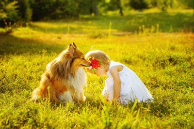 shetland-sheepdog-with-baby-header