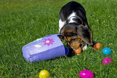 beagle-puppy-easter-egg-hunt-header