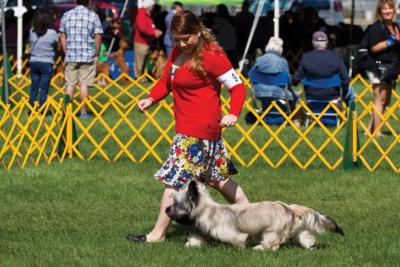 archer-skye-terrier-dog-show-hero