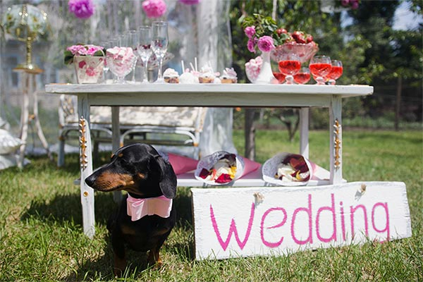 dachshund-outdoors-at-wedding-body