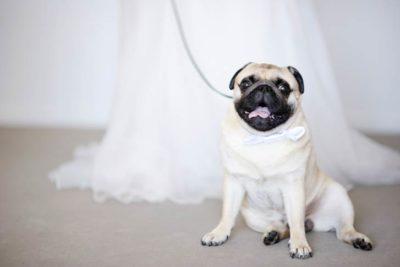 dog-wedding-hero