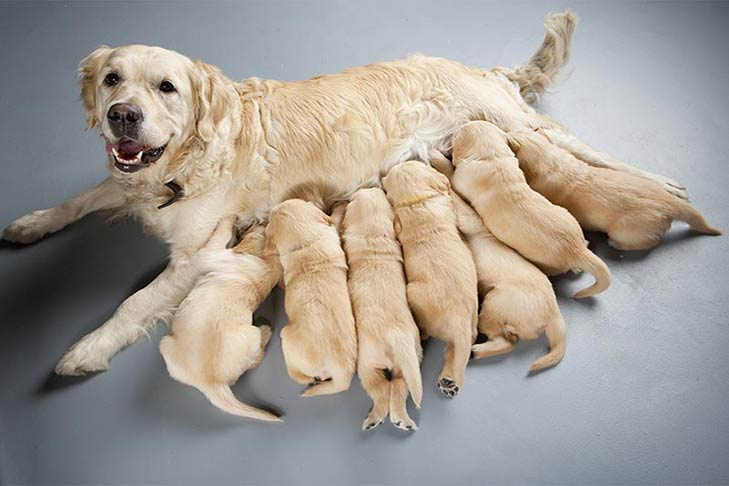 8 Mom & Babies Golden Retriever Photos That Will Make Your Day