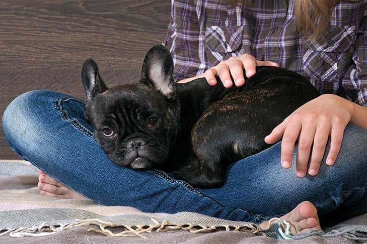 15 Reasons Why French Bulldogs or