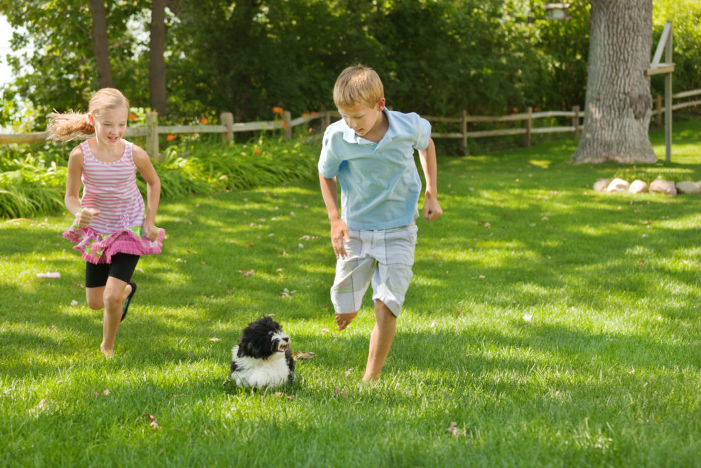 children playing with dog in the yard