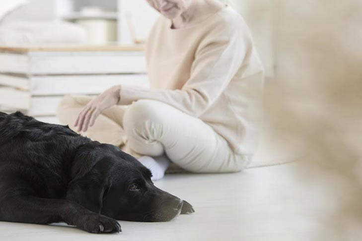 Are Essential Oils Safe for Dogs? There Are Quite a Few