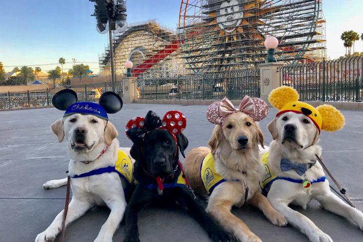 service dogs go to disneyland see the joyful photos