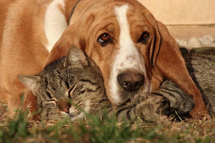 dogs that are good with cats breeds that tend to do well with felines