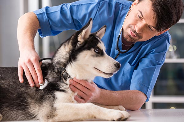 How to Talk to Your Veterinarian About CBD Oil – American Kennel Club