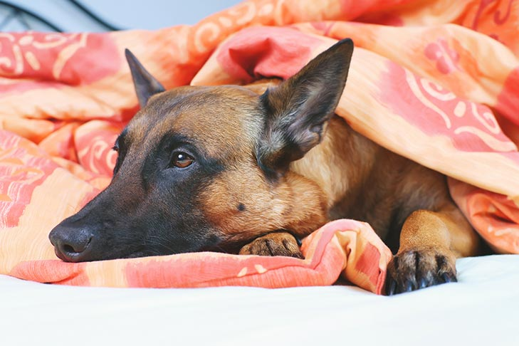 Dog Seizures: What to Do When Your Pup Has One